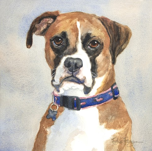watercolor painting by Edie Fagan of Boxer.  dog portrait, dog painting