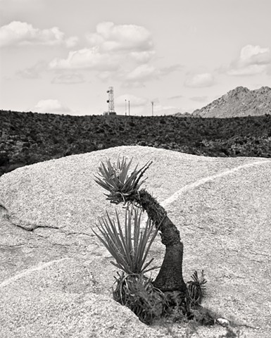 Kokopelli In The Mojave Yucca The Granite Mountains, Mojave Desert
