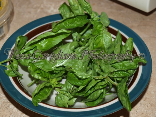 Garden Fresh Basil