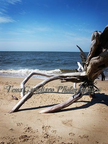 Higbee's beach 6