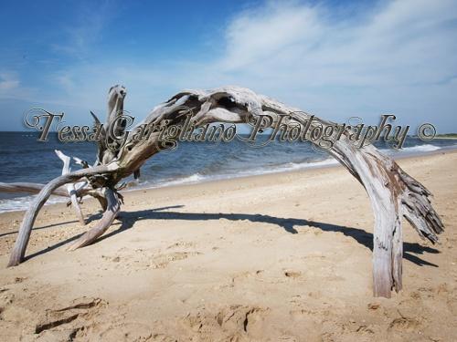 Higbee's beach 4