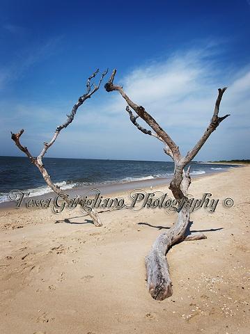Higbee's beach 5