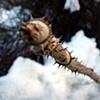 Sharpest Thorn