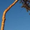 Minnewaskan Tree