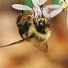 Fall Bee