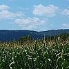 Fields of Corn 2