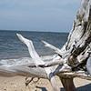 Higbee's beach 2