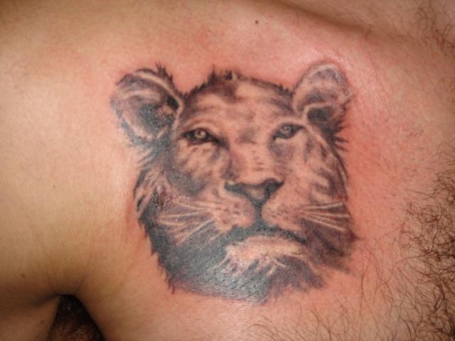 India lion