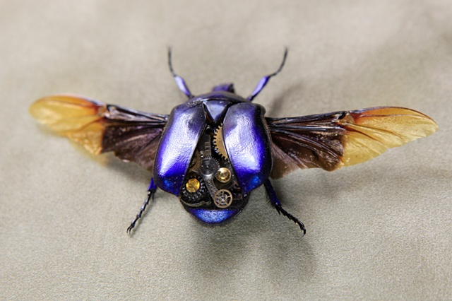 Amazing Saphire Blue Flower Beetle Steampunked out Mechanical, Insect, Bugs, Gears, Steampunk, Steam Punk by Lindsey Bessanson