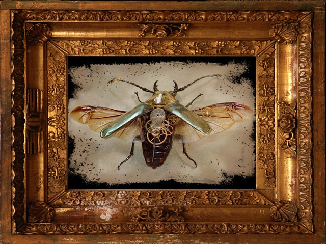 Female gold stag beetle with Gilded Frame Mechanical, Insect, Bugs, Gears, Steampunk, Steam Punk by Lindsey Bessanson