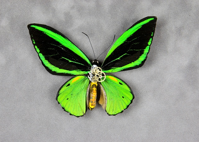 Amazing Green Steempunked Butterfly Mechanical, Insect, Bugs, Gears, Steampunk, Steam Punk by Lindsey Bessanson