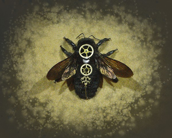Carpenter Bee, Black, Steampunk Insect, Steam Punk, Hybrid Insects,  Bug, Insects, Arachnid, Spider, Art, Sculpture, Macabre, Beautiful, Real, Sci-Fi, Surreal, Victorian, Prints, HadalArt.com, Lindsey, Lindsey Bessanson, Bessanson, Framing, Lights, Handma