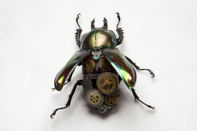 Female Green Metallic Steampunk Stag Beetle Mechanical, Insect, Bugs, Gears, Steampunk, Steam Punk by Lindsey Bessanson