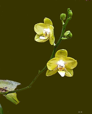 Orchid No. 56