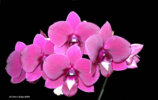 Orchid No. 4