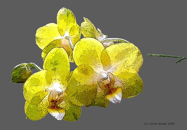 Orchid No. 52
