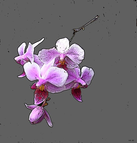 Orchid No. 59