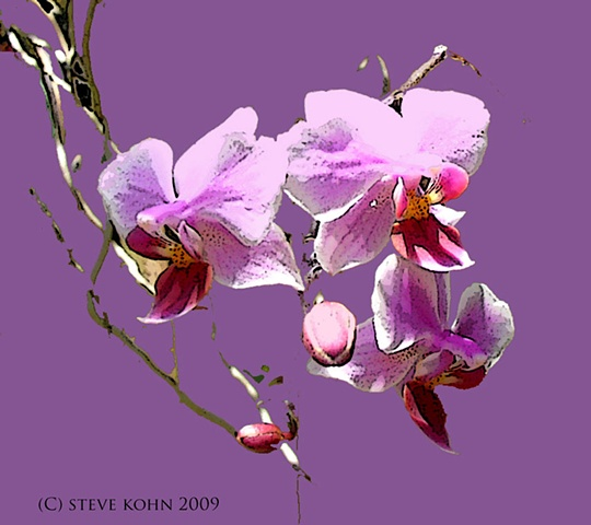 Orchid No. 55