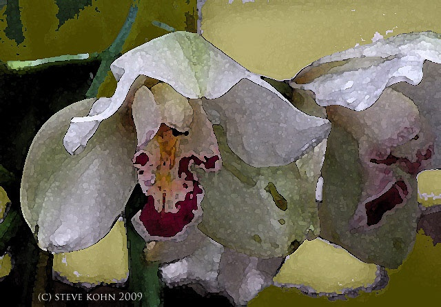 Orchid No. 49