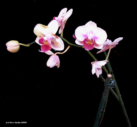 Orchid No. 128