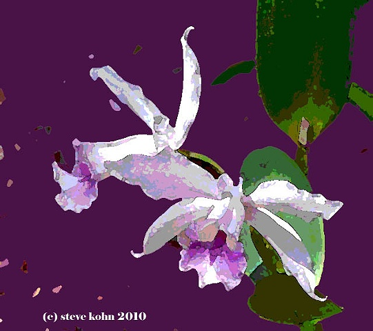 Orchid No. 39