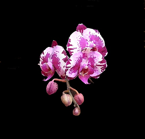 Orchid No. 133