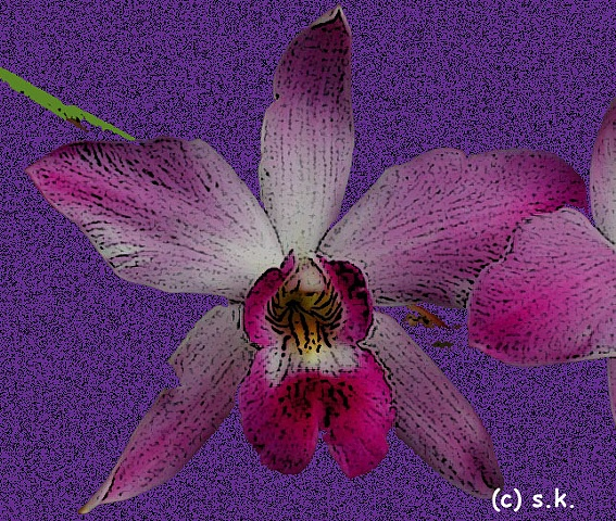 Orchid No. 6