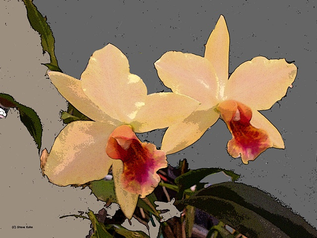 Orchid No. 88
