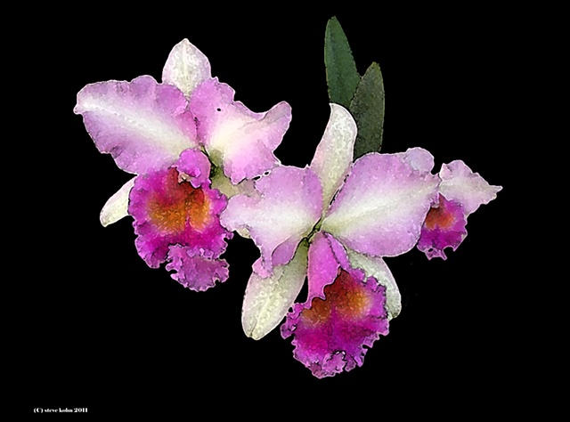Orchid No. 104