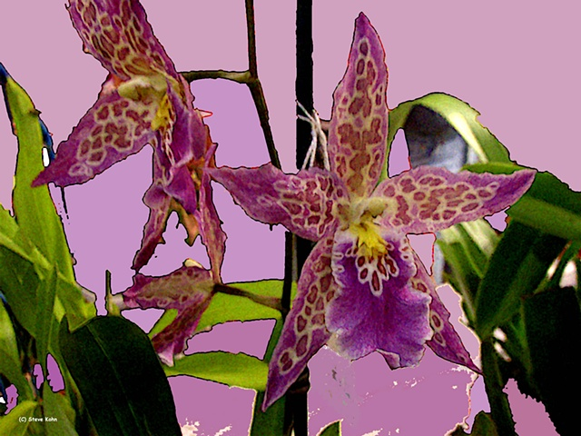 Orchid No. 83