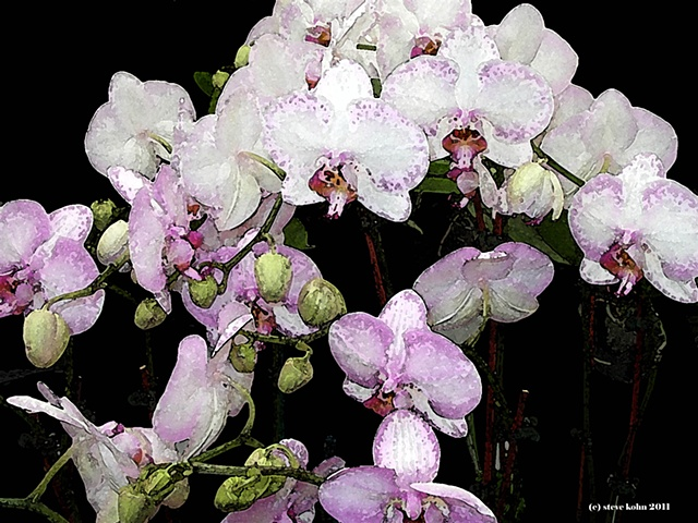 The Orchid Series