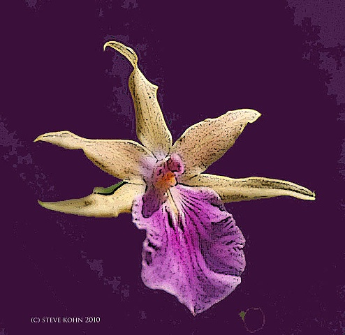 Orchid No. 28