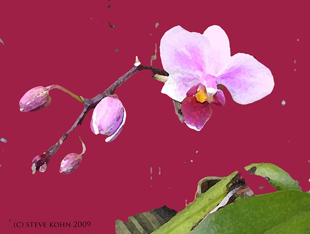 Orchid No. 51