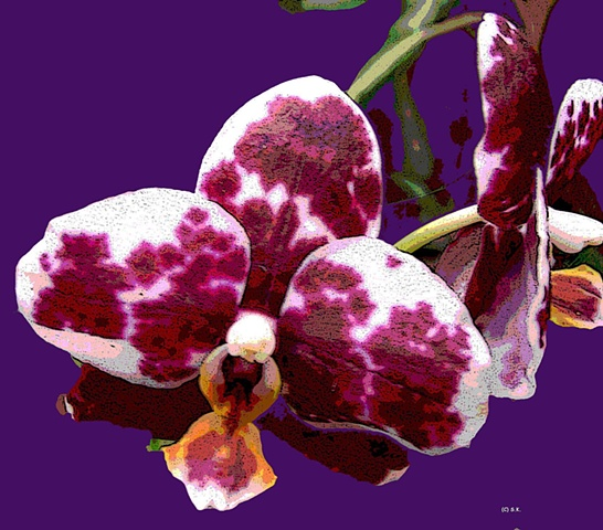 Orchid No. 1