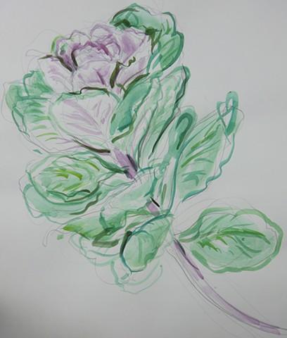 Cabbage Flower 1