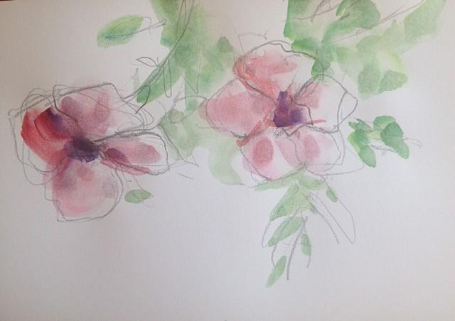 Sketch Flowers Mexico