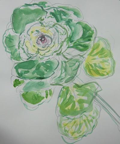 Cabbage Flower 2