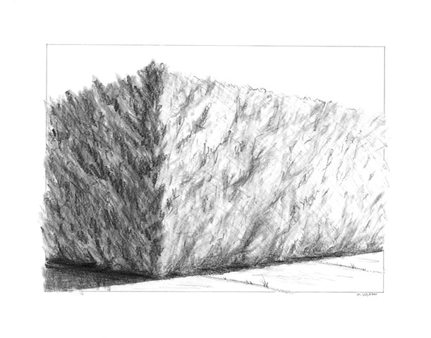 Marion Webber drawings, graphite, trees, grasses, landscape