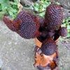 Xenoflora 1