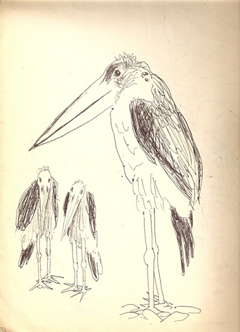 Painted Ibis