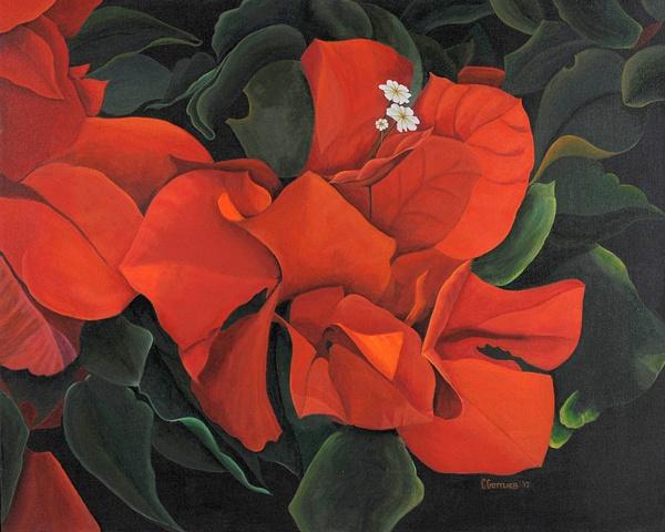Orange Bougainvillia