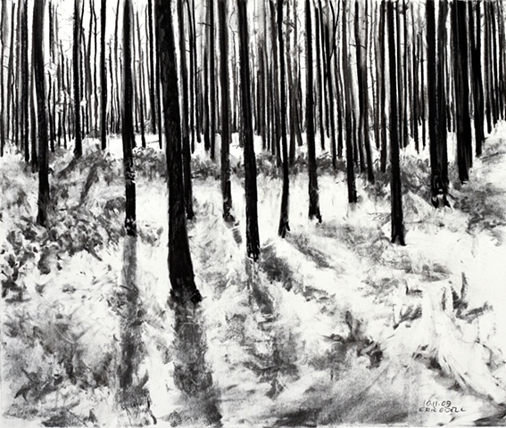 Forrest, South Georgia 2, charcoal, 2009