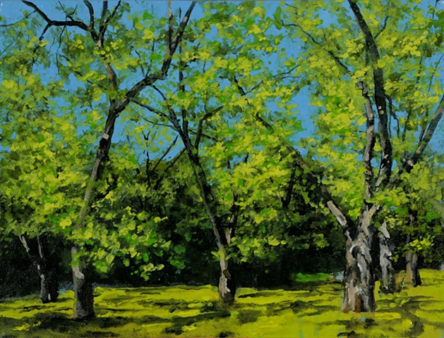 Pecan grove, spring, southern land scape