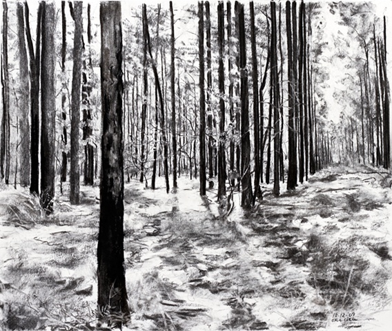 Forrest, South Georgia, charcoal, 2009