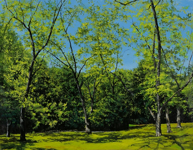 Pecan grove, spring, southern, landscape