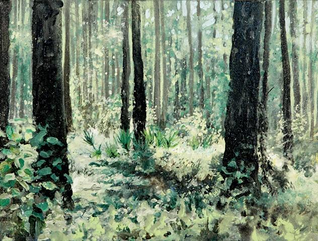 Landscape, Southern, Palmetto, Pine