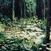 Forrest Floor, Shimmer