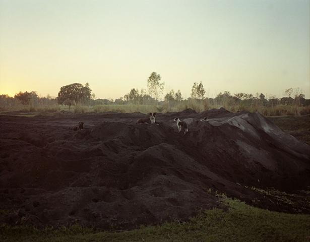 Dogs; Dhampur, Uttar Pradesh