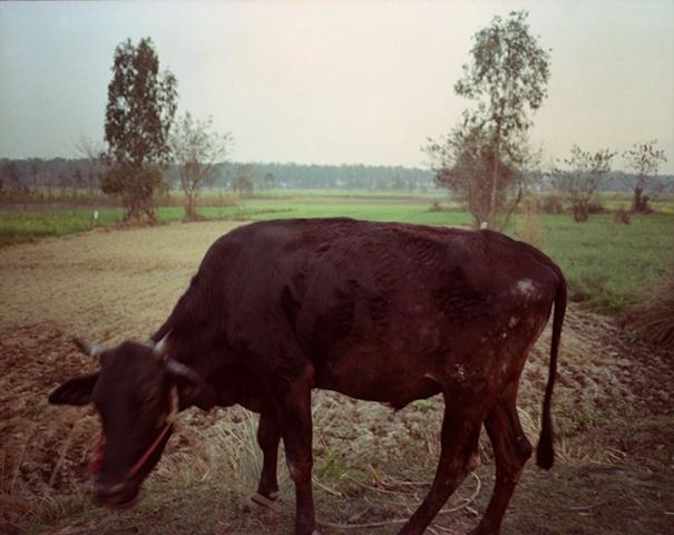 Sacred one; Dhampur, Uttar Pradesh