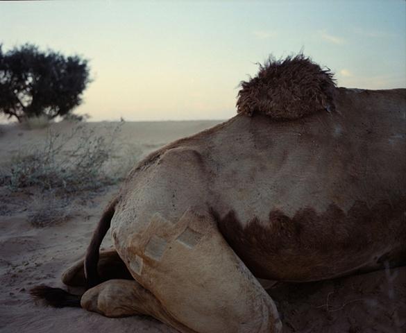 Rani in repose; Thar Desert, Rajasthan